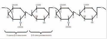 фрагмент гиалуроновой кислоты